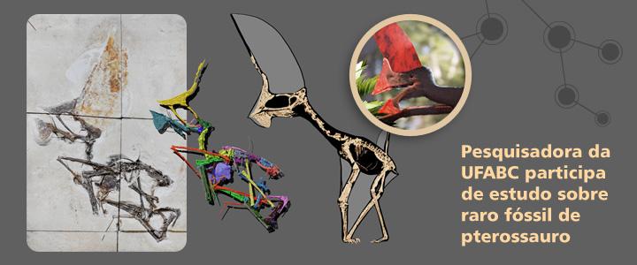 Docente da UFABC coordena pesquisa sobre um dos fósseis de pterossauro mais completos e preservados do Brasil